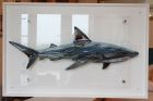 Shark -  £495 including chrome stand offs, excluding postage